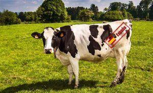 origen leche vaca