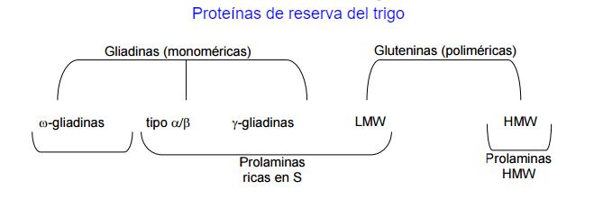 tecnologia del gluten esquema clasificacion