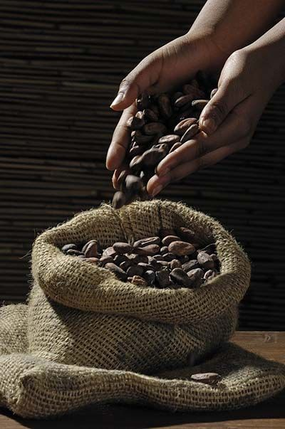 sucedaneos de chocolate cacao
