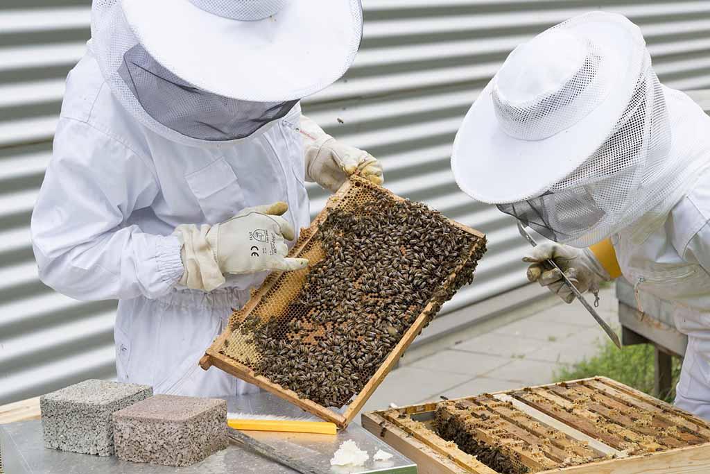 pais de origen miel