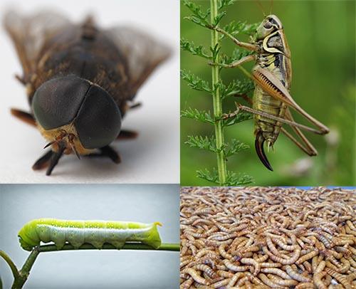 insectos varios